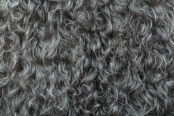 Gary wool texture background, cotton wool, grey  fleece, dark fluffy fur, curly hair, macro shot