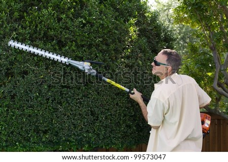 gas-powered trimmer on yaupon holly tree
