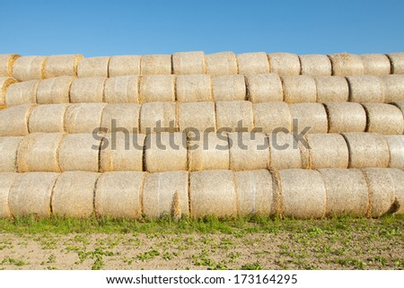 Gathered hay bales in a field #173164295