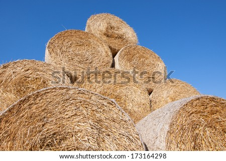 Gathered hay bales in a field #173164298