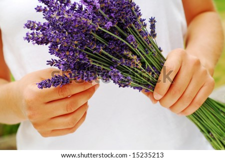 Gathering a bouquet of lavender