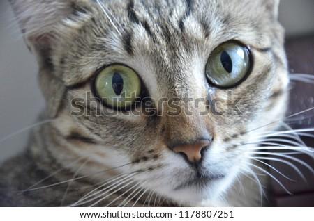 Gato olhando fixo Foto stock ©