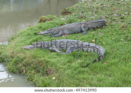 Gators Hold The Animal At The Top Of The Food Chain Ah Because Of