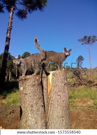 gatos, posing, america, domestic, gato, pet, feline, cat #1573558540