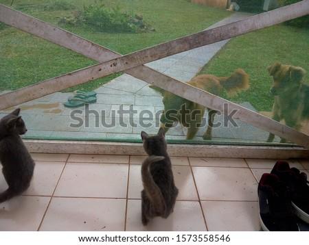 gatos, posing, america, domestic, gato, pet, feline, cat #1573558546