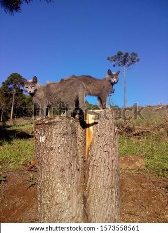 gatos, posing, america, domestic, gato, pet, feline, cat #1573558561