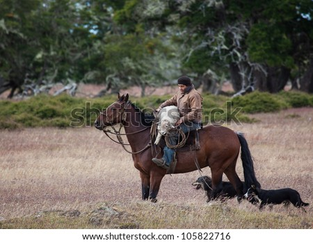 Gaucho, Carlos Martines, rescues injured sheep and carries it on his horse
