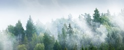 Gauja river valley and pine forest in a clouds of thick mysterious morning fog at sunrise. Sigulda, Latvia. Breathtaking panoramic aerial view. Pure nature, environmental conservation, eco tourism