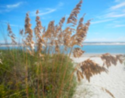 Gaussian blurred golden beach grass shimmering against the blues of ocean and sky on the South Carolina coastline