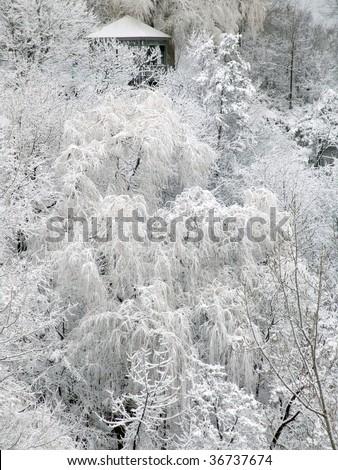 Gazebo in winter forest