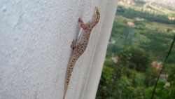 Gecko - close up Amazing Camouflage Animals, Camouflage lizards It's also called Mediterranean house gecko, akdeniz sakanguru, pacific house gecko, wall gecko, house lizard