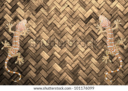 Gecko on the wall Light brown  color paint weave wall for background