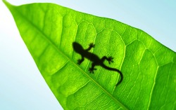Gecko shadow on a green leaf. Abstract