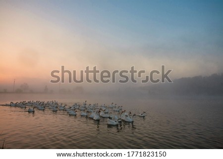 Geese are flying away from a pond covered with fog.