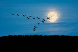 Geese flying in formation against Sky and Moon