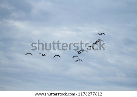 Stock Photo Geese Flying North For The Winter Over Frozen Lanscape
