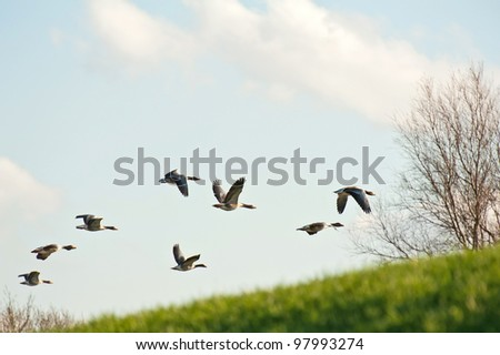 Geese flying over a dam in winter