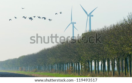 Geese flying over a field at fall