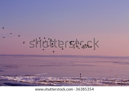 Geese flying over a frozen lake in Wisconsin - stock photo
