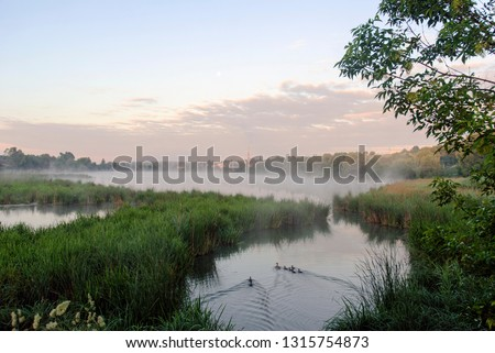 Stock Photo Geese in fog. Flock of birds swims near shore of river under trees. Beautiful spring landscape in morning. Reflections in water