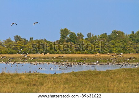 Geese migrating south against blue sky