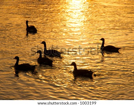 Geese Silhouettes