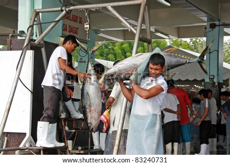 GEN. SANTOS CITY, PHILIPPINES - AUG 20: Worker carry tuna for weighing at Gen. Santos Fish Port in Gen. Santos City, Philippines on Aug. 20, 2011. Catching tunas is one of the main source of income.