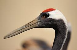 general crane heron bird with long beak