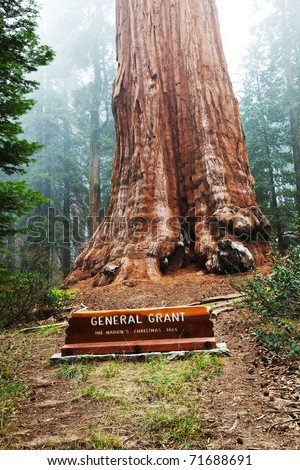 General Grant sequoia tree