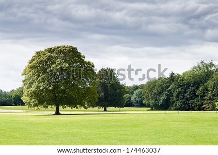 Photo of General image of a green park with trees.