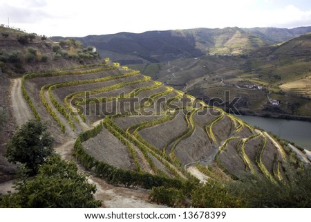 General view of the famous vineyards of Porto wine.
