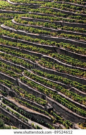 General view of the world famous vineyards of Porto wine.More in my gallery.