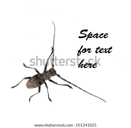 Generic bug or beetle - isolated over white background