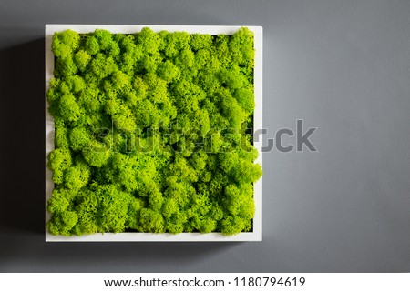 Generic concept image of decorative moss.  Used for interior design, organic fresh living or office spaces, green living or presentations, brochures.