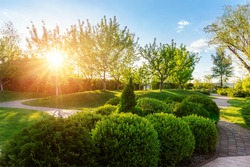 Generic green fresh round spheric boxwood bushes wall with warm summer sunset light on background at ornamental english garden at yard. Early autumn green natural landscape park background