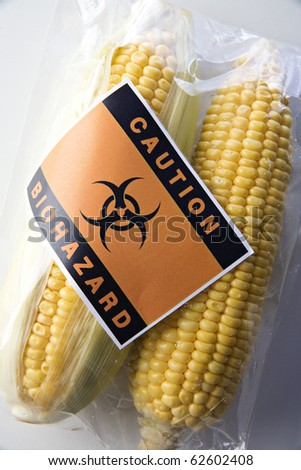 Genetically modified corn food concept with bio-hazard sign