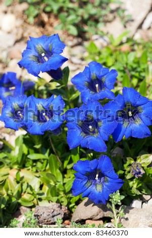 gentian flowers on a sunny day