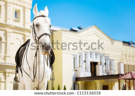 Gentle and honorable. Professional beautiful white racehorse looking extremely gentle and honorable #1153136018