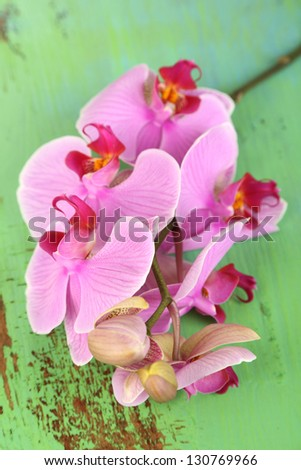 Gentle beautiful orchid on wooden table close-up
