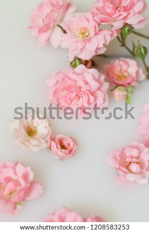 Gentle blurred background with roses floating in milk. #1208583253