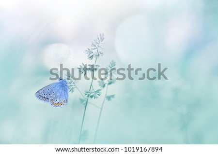 Gentle natural background in pastel colors with a soft focus of blue shades.  Wild meadow grass and butterfly in spring in nature macro. Beautiful summer meadow, inspiration nature.