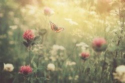 Gentle natural floral background in vintage colors with soft focus. Beautiful summer meadow with flowering clover grass and flying butterfly in rays sunset in spring, macro, inspiration nature.