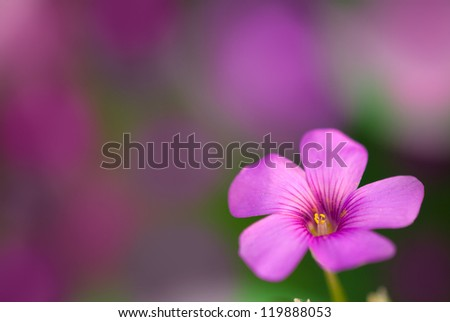 Gentle pink flower with violet background