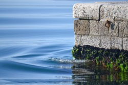 Gentle sea wave breaking on concrete dock with shells and algae