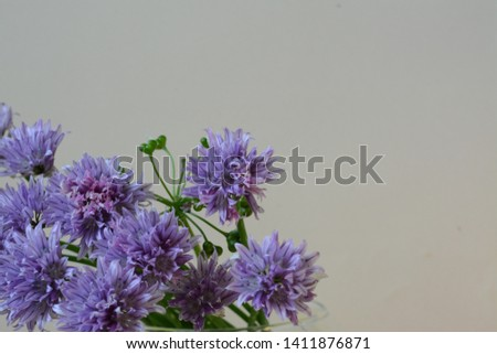 Gently violet allium flowers and green grass on a gentle purple background #1411876871