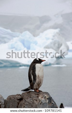 Gentoo Penguin standing on rock in Paradise Harbour on the Antarctic Peninsular