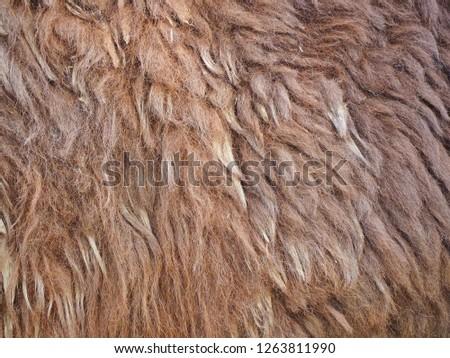 Genuine Brown fur and skin of Alpaca for nature background. Defocus picture.