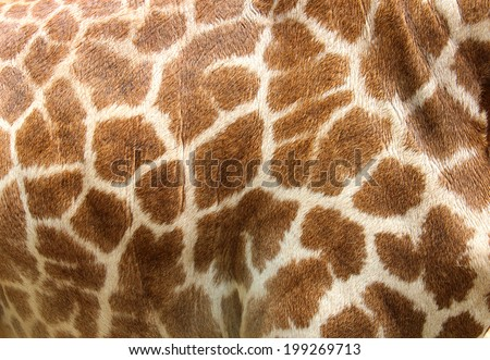 Genuine leather skin of giraffe with light and dark brown spots. #199269713