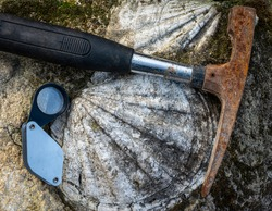 geological hammer or rock pick ,with fossil shell  in limestone and hand lens .