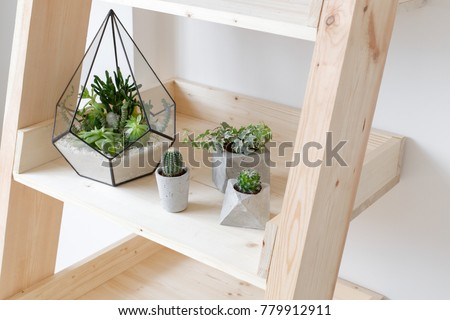 Geometric glass florarium vase with succulent plants and small cacti in a concrete geometric pots on wooden rack. Small garden with miniature cactuse, echeveria, crassula. House indoor plants.